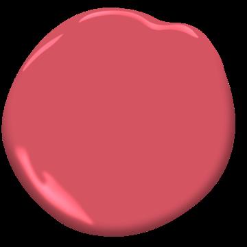 Italiano Rose